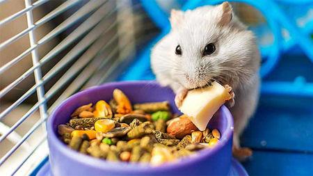 Imagen para la categoría Alimentos Otros
