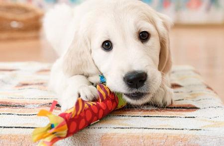 Imagen para la categoría Juguetes Perro