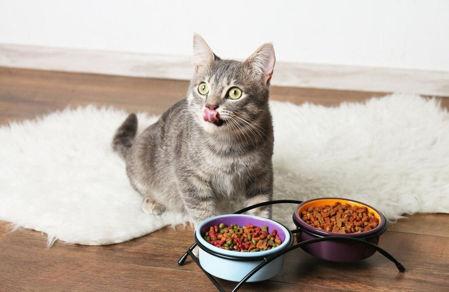Imagen para la categoría Alimentos Gato