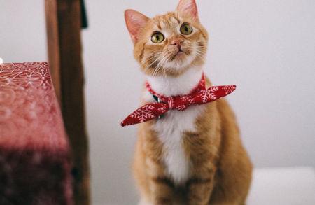 Imagen para la categoría Accesorios Gato