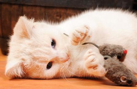 Imagen para la categoría Juguetes gatos