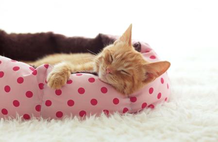 Imagen para la categoría Camas Gato