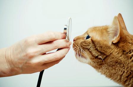 Imagen para la categoría Salud Gato